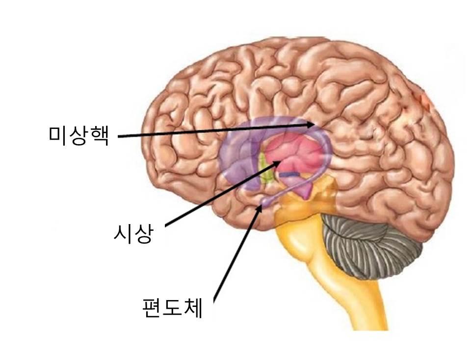 직관력의뇌구조.jpg