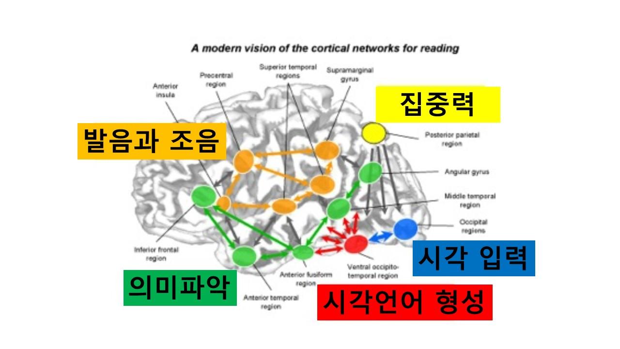 독서의뇌.jpg
