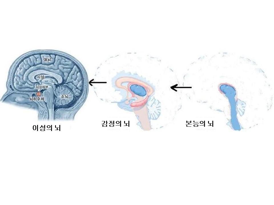 3층의뇌.jpg