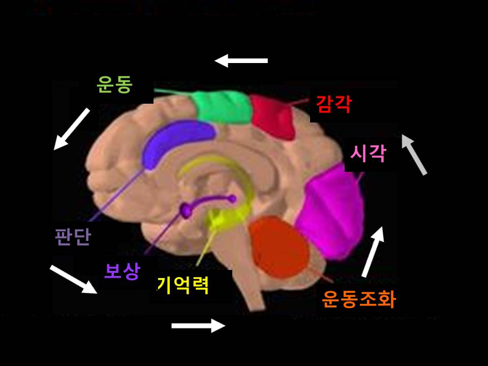 사춘기의뇌.jpg