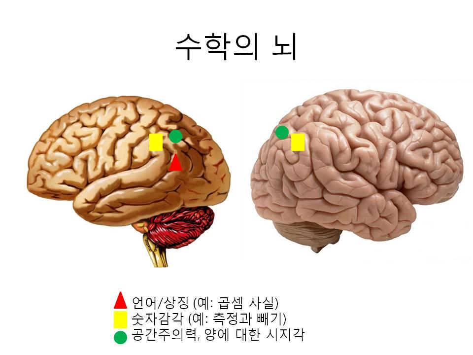 수학의뇌.jpg