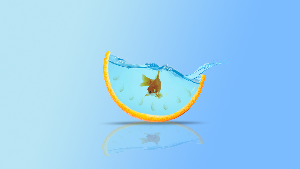 goldfish-3121304_960_720.png