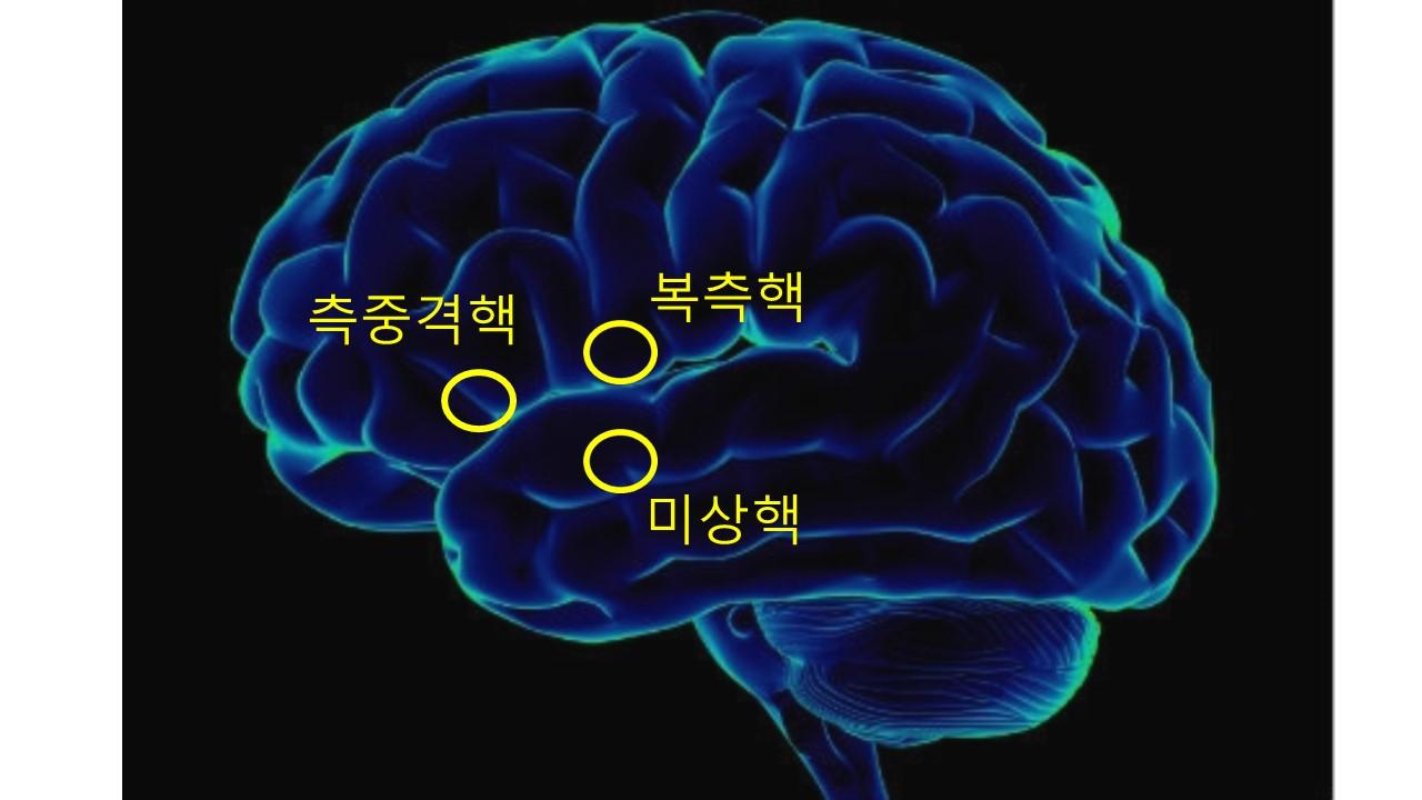 호기심의뇌.jpg