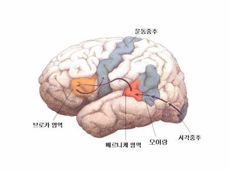 언어의뇌.jpg