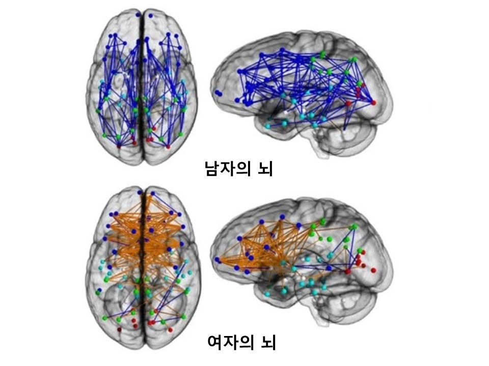 남자의뇌와여자의뇌.jpg