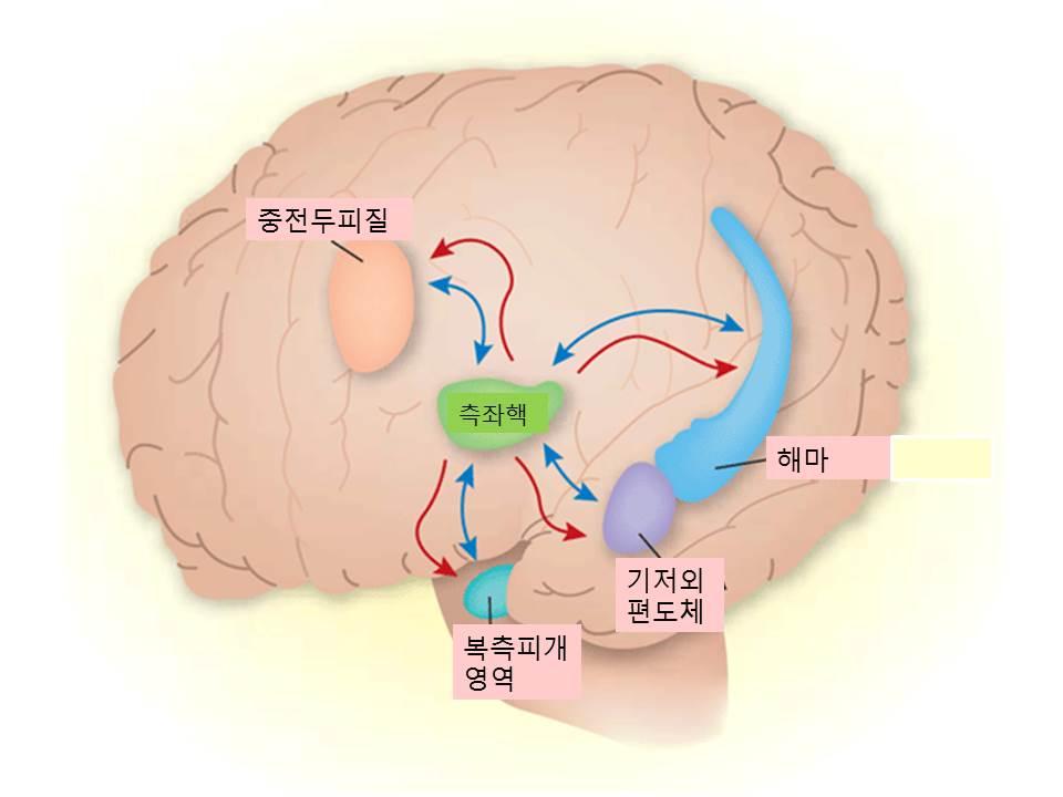 시험불안의뇌.jpg