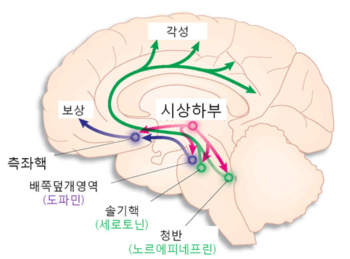 뇌2.jpg