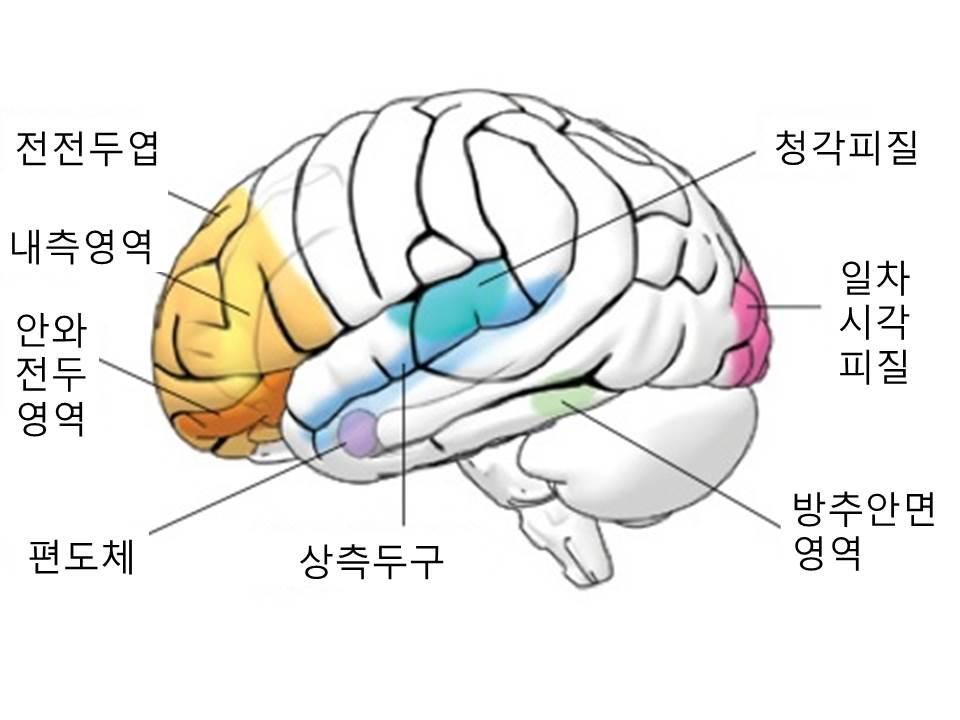 사회성의뇌.jpg
