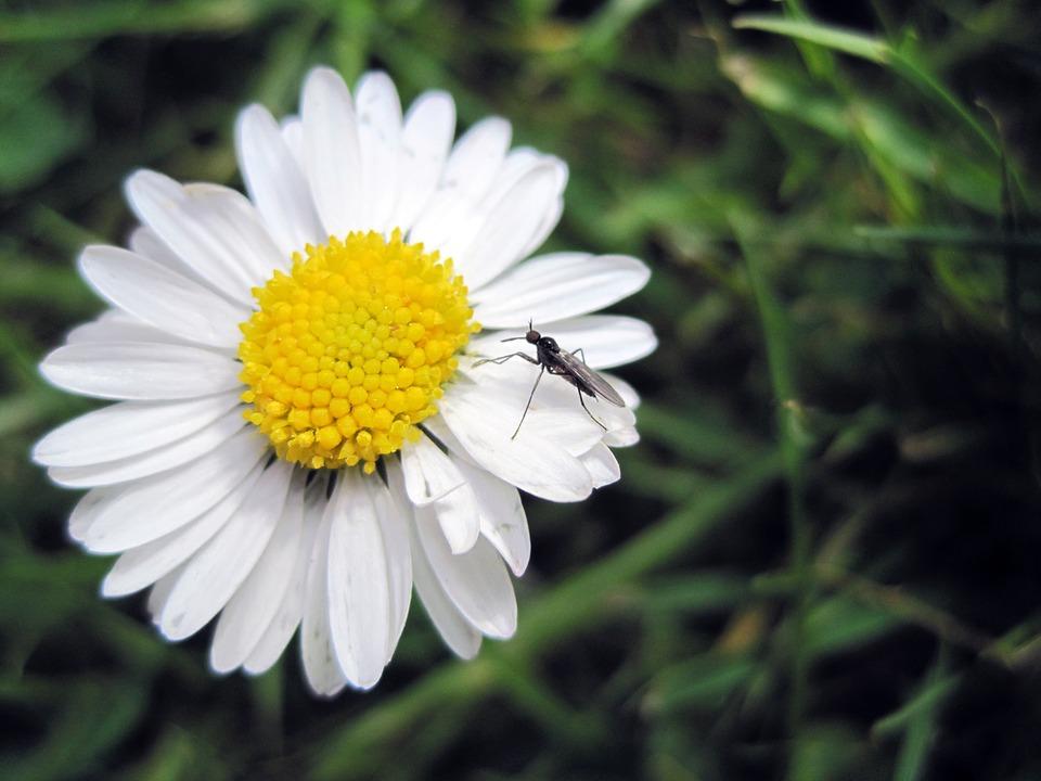 flower-1046371_960_720.jpg