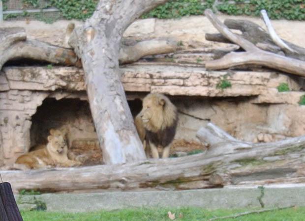 바로셀로나동물원10DSC_6922s.jpg