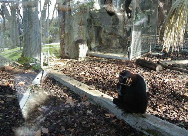바르셀로나동물원2DSC_6929s.jpg
