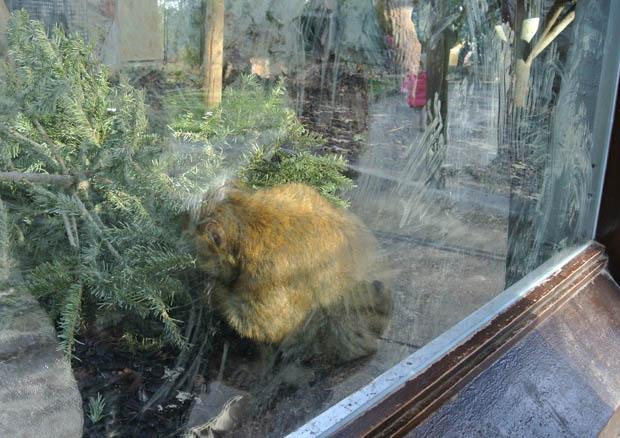바르셀로나동물원4DSC_6931s.jpg