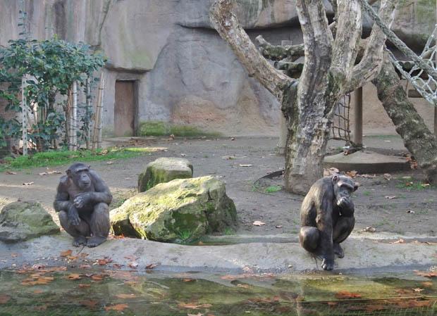 바르셀로나동물원5DSC_6946s.jpg
