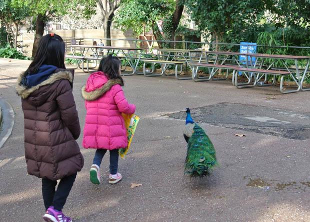 바르셀로나동물원7DSC_6946s.jpg