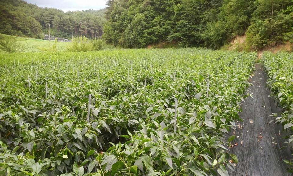 농부통신 37-3.jpg