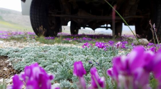 고원의 꽃.JPG