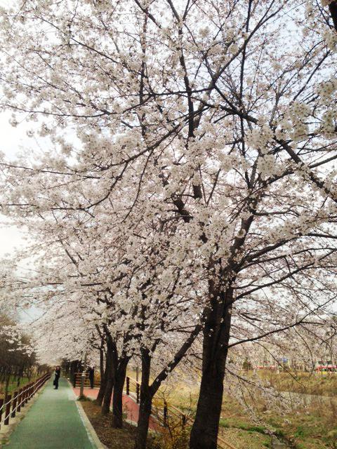 꽃4.jpg