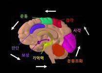 사춘기 영재들의 후두엽 발달...삼차원 시각 가져
