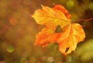 가을철 피부건조증. 해결책은?