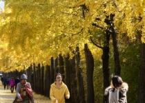 계절 타는 '가을철 우울증', 햇빛 쬐는 야외활동이 '특효약'