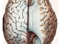 엄마와 아빠의 두뇌조화