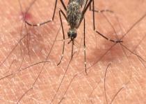 전국에 일본뇌염 주의보…부산서 올해 첫 모기 발견