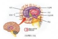 습관의 뇌를 이용하는 방법