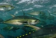 생선, 수은으로 부터 안전한가
