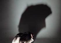 법적 보호아동 넷 중 한 명은 '아동학대' 탓