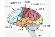 뇌도 좌-우 날개로 난다