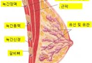 임신 초기의 유방통과 모유수유