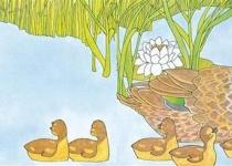 [서천석의 내가 사랑한 그림책] 살랑살랑 나비에 눈팔린 아기 오리