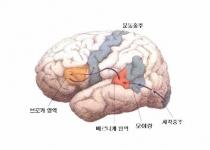 모국어가 두뇌발달에 더 효과적이다